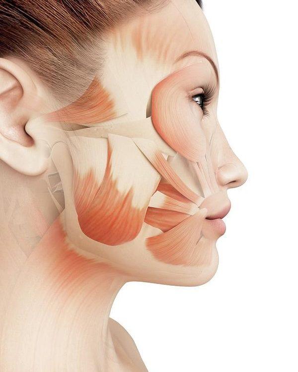 Anatomija lica - Ultrazvučni SMAS lifting